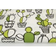 Cotton 100% green cactuses on a white background