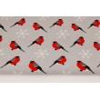 Bawełna 100% ptaszki, gile na jasnoszarym tle