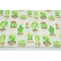 Bawełna 100% kaktusy w doniczkach na białym tle
