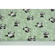 Cotton 100% pandas on a bamboo on a green background