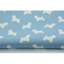 Cotton 100% white terriers on a blue background
